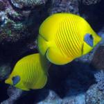 Potápění, bájná minulost, odlišná kultura a krása přírody, to je dovolená v Egyptě